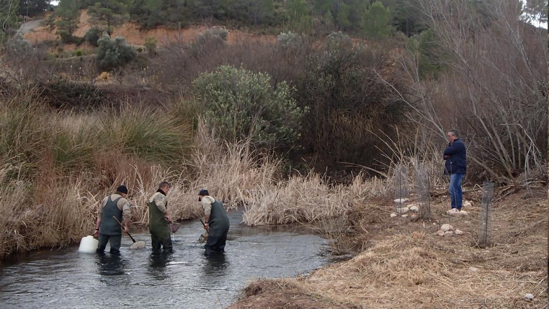 Iberdrola culmina su colaboración en la recuperación de la loina en el río Cautabán